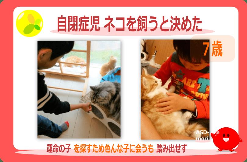 自閉症児と猫